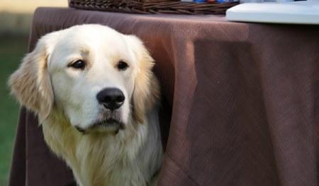 Sitz, Platz, Fuß - Basiserziehung für den Hund