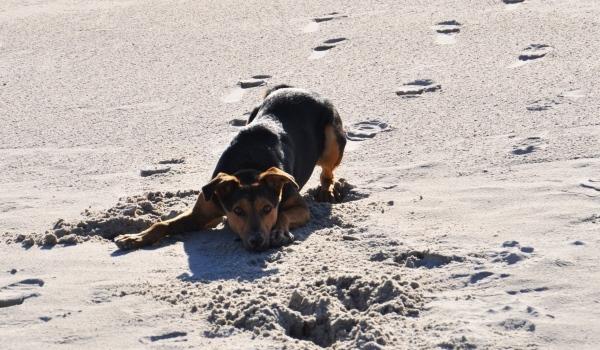 Spielstunde für große und kleine Hunde