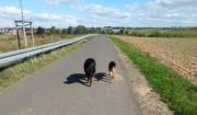 Hund ausführen