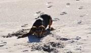 Spiel und Spaß für Hunde